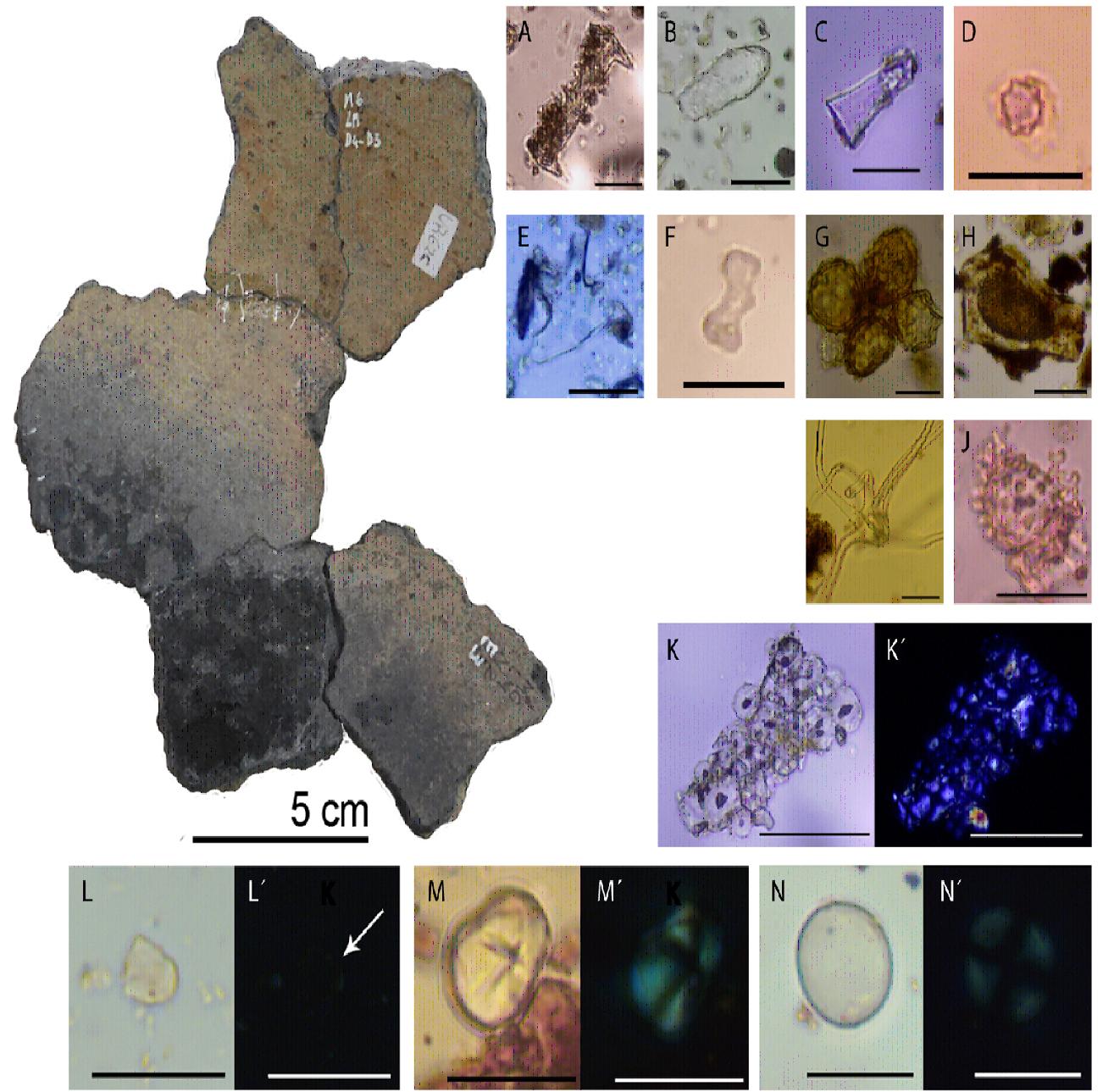 Cerámica y microfósiles identificados.